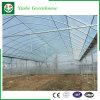 Einzeln-Überspannung Film-Gewächshäuser für das Pflanzen