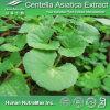 El 100% Centella puro Asiatica Extract (asiaticoside del 30%~90%)