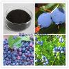 Antocianida 25% do extrato de Billberry