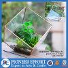 銅の屋内植木鉢はガラス陸生動物飼育器のミニチュアプランターを取り除く