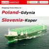 Agente de transporte Koper de China (Slovenia); Gdynia (Poland) - FCL& LCL