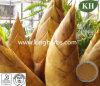 Polisacárido natural puro el 40% del extracto del brote de bambú ULTRAVIOLETA