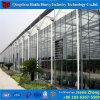 Chambre verte en verre commerciale galvanisée parEnvergure pour la tomate