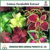Het hete Uittreksel van het Poeder van Forskohlii van de Siernetel van China van de Verkoop met Forskolin 10%-98%