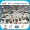 Équipement de alimentation automatique de poulet de sélectionneur dans la Chambre en acier