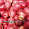 Buena calidad Apple red delicious fresco, Huaniu Apple