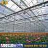Greenhouse를 위한 유리제 Panel