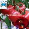 製造業者は自然なトマトの粉を供給する
