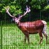 Plastic Omheining Netto voor de Amerikaanse elanden van de Herten van /Mule van Elanden