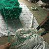 編まれたブドウ園の反鳥の網