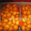 Nova colher chinesa fresca e de boa qualidade Mandarin Orange