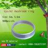 Austeren-Pilz-Ring