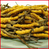 Polisacáridos de Cordyceps do extrato de Cordyceps 10%-40%