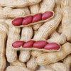 최신 판매 2015년 중국 신선한 꿰뚫린 땅콩