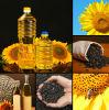 Aceite de girasol crudo No-Gmo para la venta al por mayor