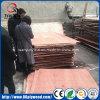 Fábrica comercial da madeira compensada da melamina de China Linyi Bintangor Okoume