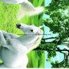 100%Polyester o cavalo branco Pigment&Disperse imprimiu a tela para o jogo do fundamento