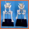 Modelo de esqueleto animal da junção do Lumbar do cão