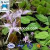 Extrato natural da planta de Grandiflorum do Epimedium de 100%