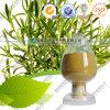 Acido acido acido di Carnosic Rosmarinic Ursolic dell'estratto del foglio della Rosemary