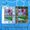 Blocco per grafici madreperlaceo della foto (A-GY002)