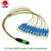 12-24 Cores MPO Hydra Cable Patchcord