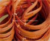 Láminas congeladas de la sierra de cinta del corte del hueso de la carne