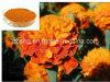 Lutein 10% do extrato da flor do Marigold, 20%, 40%, 50%, 90%
