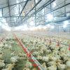 De automatische Apparatuur van het Huis van de Kip voor het Landbouwbedrijf van de Grill