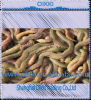 Ragworm-The vivente Best Bait per Sea Fishing (OIKKI-RAGWORM)