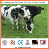 Alta qualità e Hot Sale Cattle Fence/Field Fence