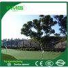 골프를 위한 자연적인 정원 양탄자 잔디