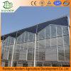 Invernadero de cristal de alta calidad 8.0m Multi-Span para la agricultura