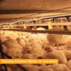Las aves de corral contienen la jaula de la parrilla del edificio agrícola de pollo de la estructura de acero