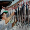 GMP, верхний коллаген, порошок пептида коллагена Milkfish 100% естественный золотистый, здоровая еда