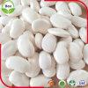 Getrocknete große weiße weiße Bohnen