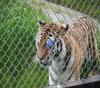 網(TS-J79)を囲う電流を通された動物園