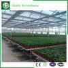 De Serre van het Glas van de aardappel/van de Tomaat met het Systeem van de Ventilatie