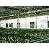 Ventilations-Flügelgebläse-industrieller Ventilator-Gewächshaus-Ventilator