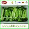IQF gefrorener Schnitt-Brokkoli