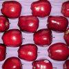 Erste Qualitätsroter-deliciousapple-Lieferant