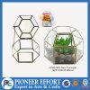 가정 장식 정원 장식을%s 기하학적인 열 수 있는 유리제 Terrarium