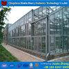 Casa verde agricultural de vidro do multi Hydroponics da extensão para o pepino