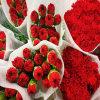 Dounanユンナン中国からエクスポートする茎が付いている卸売によって切られる新しいカーネーションの花