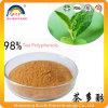 Extrait vert de feuille de thé avec du polyphénol de thé