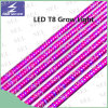 T8 il tubo 85-265V 10W 18W LED coltiva l'indicatore luminoso