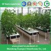 Landwirtschafts-Polycarbonat-Handelsgewächshaus mit Wasserkultursystem
