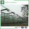 Landbouw/het Commerciële Groene Huis van de Hobby van het Glas met het Systeem van de Ventilatie