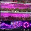Plant, LED Grow Strip Light, LED Plant Light를 위한 LED Grow Light