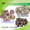 Shiitake secado orgânico da fonte do fabricante